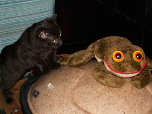 cica / cat