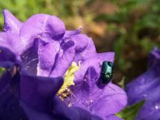 virág / flower